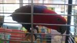 thema dierentuin 3 070
