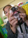 thema huisdieren 2012 088
