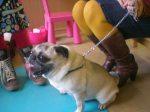 thema huisdieren 2012 696