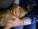 thema huisdieren 2012 936