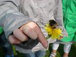 kriebelbeestjes 2013 381