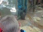 dierentuin 017