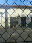 dierentuin 027