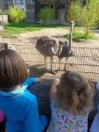 dierentuin 032