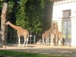 dierentuin 035