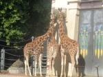 dierentuin 036