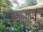 dierentuin 037
