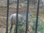 dierentuin 038