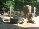 dierentuin 041