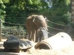 dierentuin 042