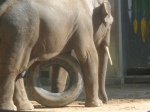 dierentuin 044