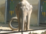dierentuin 045