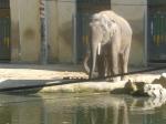 dierentuin 047