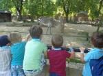 dierentuin 050