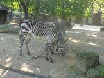 dierentuin 052