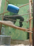 dierentuin 094