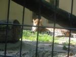 dierentuin 101