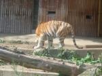 dierentuin 103