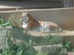 dierentuin 106