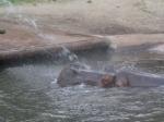 dierentuin 133