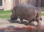 dierentuin 137