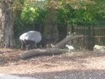 dierentuin 138